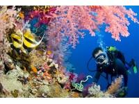Магазин подводной. Магазин снаряжения для подводной охоты Dive for you рассказывает историю зарождения индустрии