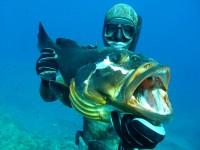 Подводное снаряжение. Как подобрать минимальный комплект подводного охотничьего снаряжения